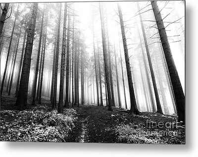 Mysterious Forest Metal Print by Michal Boubin