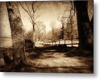 Mysterious Woodland Metal Print by Andrew Read