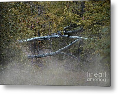 Metal Print featuring the photograph Mystery In The Fall by Skip Willits