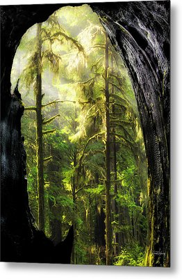 Mystical Forest Opening Metal Print by Leland D Howard
