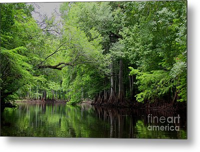 Mystical Withlacoochee River Metal Print by Barbara Bowen