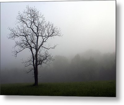 Mysty Tree Metal Print by Marty Koch