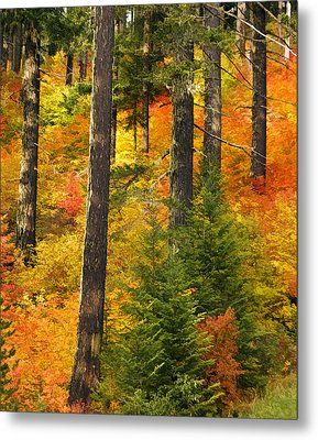 N W Autumn Metal Print by Wes and Dotty Weber