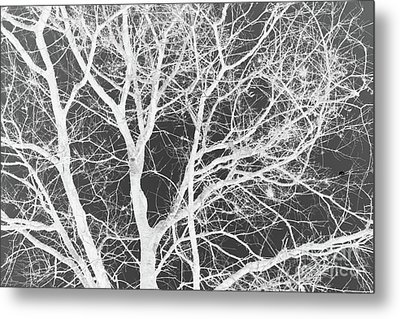 Metal Print featuring the photograph Naked Branch by Dodie Ulery