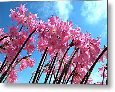 Metal Print featuring the photograph Naked Ladies by Vivian Krug Cotton