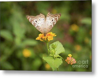 Namaste Butterfly Metal Print