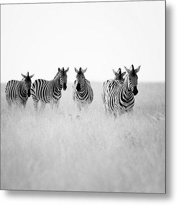 Namibia Zebras II Metal Print by Nina Papiorek