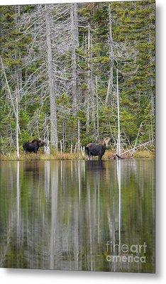 Nancy Pond - White Mountains New Hampshire Usa Metal Print