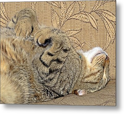 Nap Time Again Metal Print by Susan Leggett