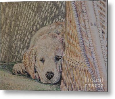 Nap Time Metal Print by Gail Dolphin