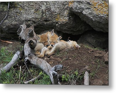 Metal Print featuring the photograph Nap Time by Steve Stuller