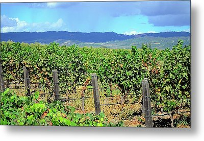 Metal Print featuring the photograph Napa by Corinne Rhode