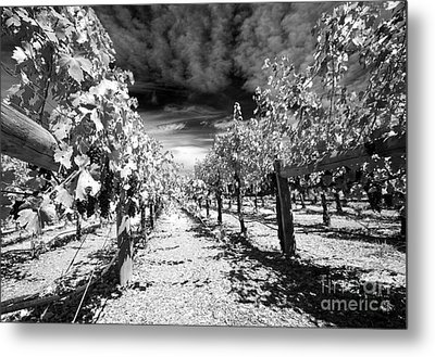 Napa Rows In Bw Metal Print