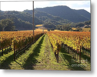 Napa Valley Vineyard . 7d9020 Metal Print by Wingsdomain Art and Photography