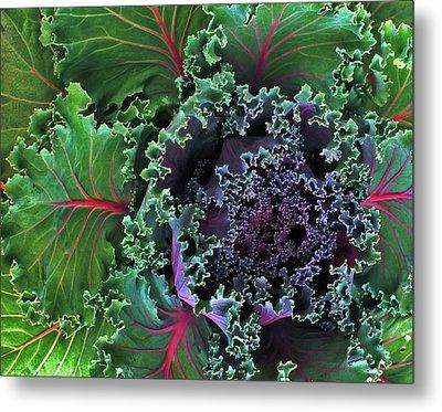 Naples Kale Metal Print by Lynda Lehmann