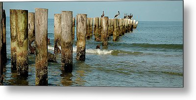 Naples Pier And Pelicans Metal Print