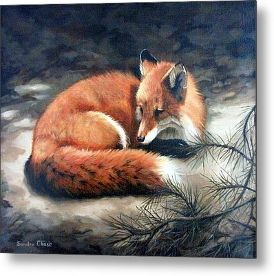 Naptime In The Pine Barrens Metal Print