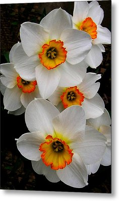 Metal Print featuring the photograph Narcissus Tazetta by Kathleen Stephens