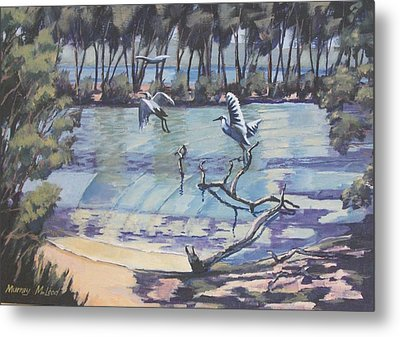 Narrabeen Lakes 2 Metal Print by Murray McLeod