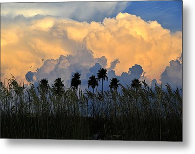 Native Florida Metal Print by David Lee Thompson