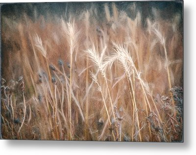 Native Grass Metal Print by Scott Norris