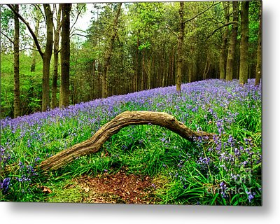 Natural Arch And Bluebells Metal Print by John Edwards