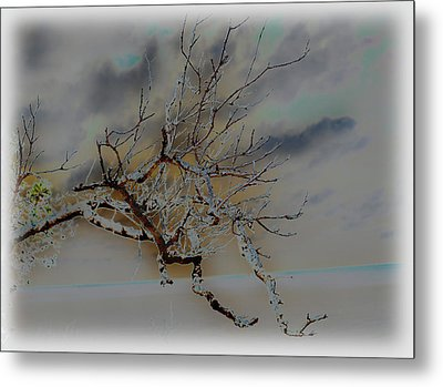 Natural Inversion -1 Metal Print by Amanda Vouglas