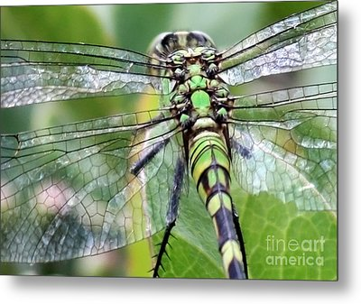 Natural Stained Glass Metal Print by Carol Groenen
