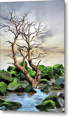 Metal Print featuring the photograph Natural Surroundings by Angel Jesus De la Fuente