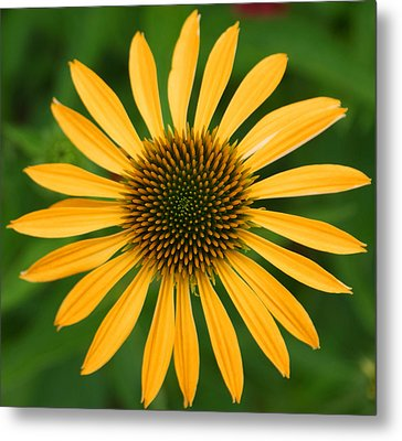 Natural Symmetry Metal Print by Jean Haynes
