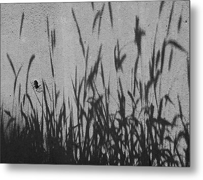 Metal Print featuring the photograph Nature As Shadow by Lenore Senior