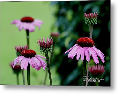Metal Print featuring the photograph Nature At Its Best by Paul SEQUENCE Ferguson             sequence dot net