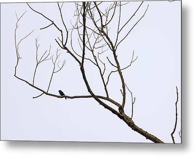 Nature - Bird On Branch 1 Metal Print