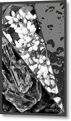 Nature Collage In Black And White Metal Print
