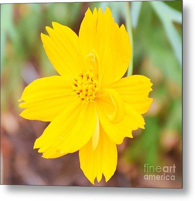 Metal Print featuring the photograph Nature Colorful Flower Gifts - Yellow by Ray Shrewsberry