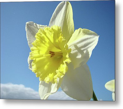 Nature Daffodil Flowers Art Prints Spring Nature Art Metal Print by Baslee Troutman