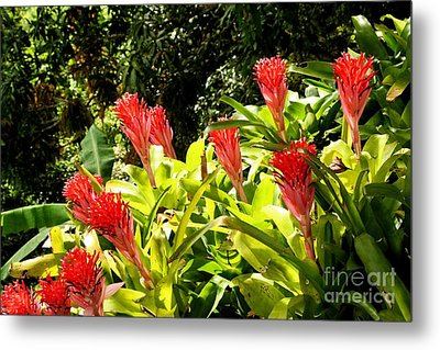 Metal Print featuring the photograph Nature Exotic by The Art of Alice Terrill