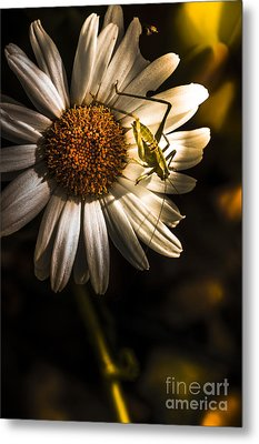 Nature Fine Art Summer Flower With Insect Metal Print by Jorgo Photography - Wall Art Gallery