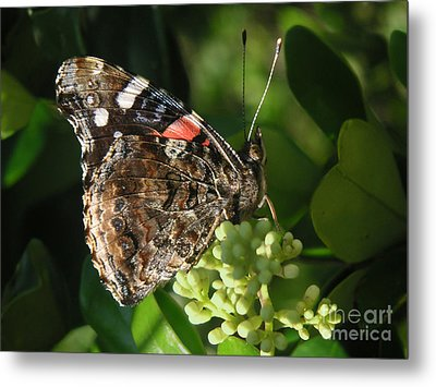 Nature In The Wild - A Rest For The Weary Metal Print by Lucyna A M Green