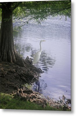 Nature In The Wild - Musings By A Lake Metal Print by Lucyna A M Green