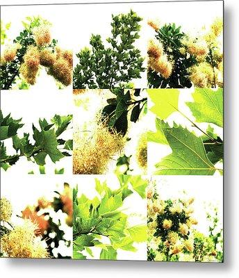 Nature Scape 030 Metal Print