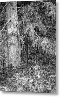 Nature Study No 1 Metal Print
