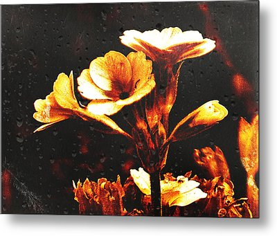 Nature Uncovered  Metal Print by Andrew Hunter