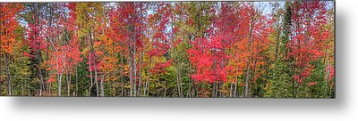 Metal Print featuring the photograph Natures Autumn Palette by David Patterson