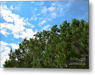 Metal Print featuring the photograph Nature's Beauty - Central Texas by Ray Shrewsberry