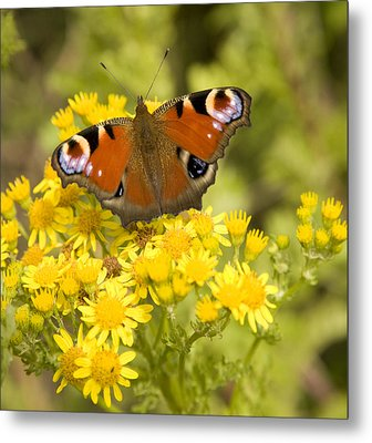 Metal Print featuring the photograph Nature's Beauty by Ian Middleton