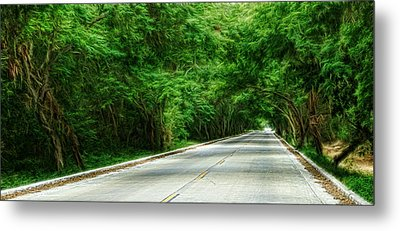 Nature's Canopy Metal Print by Cameron Wood