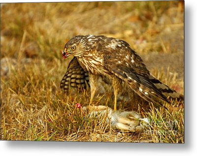 Nature's Course Metal Print by Marc Bittan