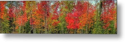 Metal Print featuring the photograph Natures Fall Palette by David Patterson
