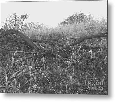 Nature's Fences Metal Print
